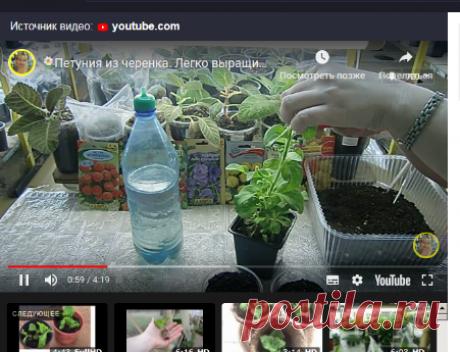 Выращивание петунии отростками — Яндекс: нашлось 2млнрезультатов