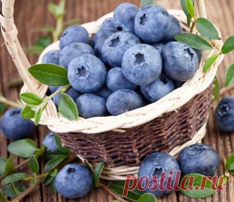 Лесные ягоды на участке: черника, голубика, брусника | 6 соток