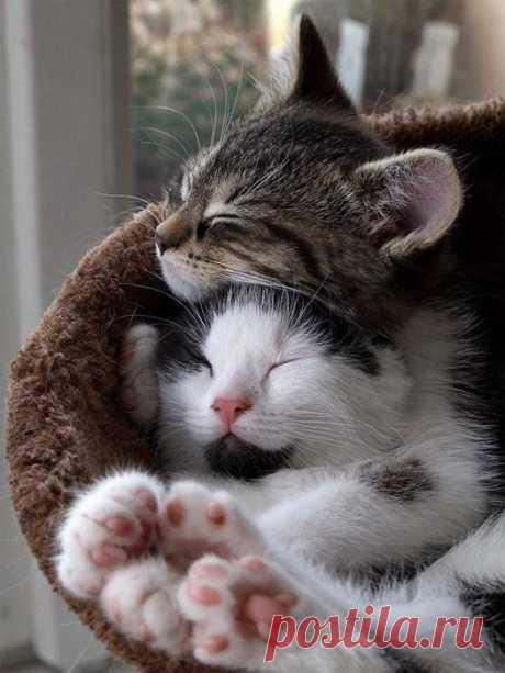 Котики - это любовь
