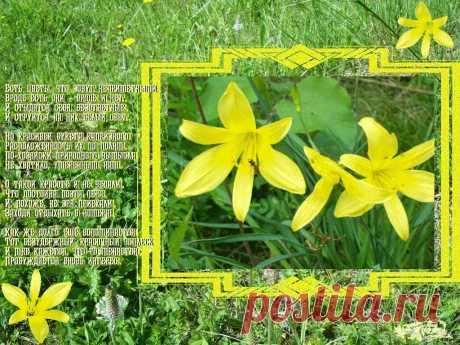 Полевые цветы ~ Плэйкасты ~ Beesona.Ru