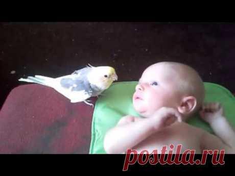 Просто Чудо!!! Попугай ПОЁТ для малыша - YouTube