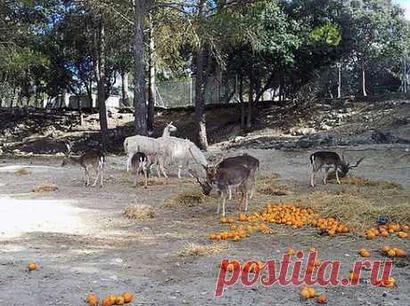 Кормление животных. Сафари-парк Айтана - Коста Бланка по-русски