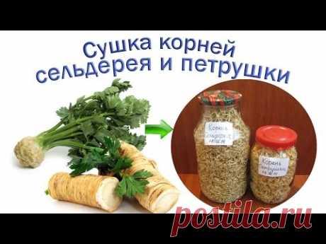 Петрушка корневая – Петрушка полезные свойства – Сушка петрушки корневой