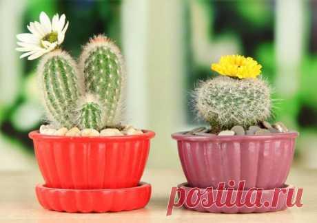 Виды кактусов c фото и названиями, уход в домашних условиях