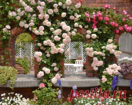 Галерея|Пионы и розы фото