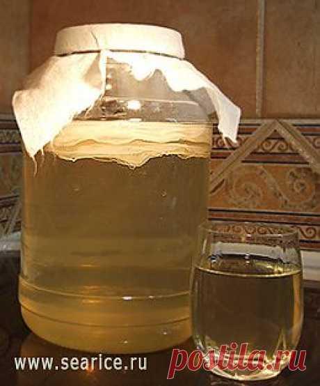 Полезные и лечебные свойства чайного гриба