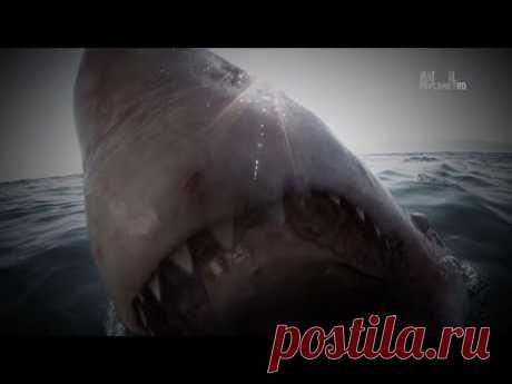 Кубинская акула - [Full HD 1080i]