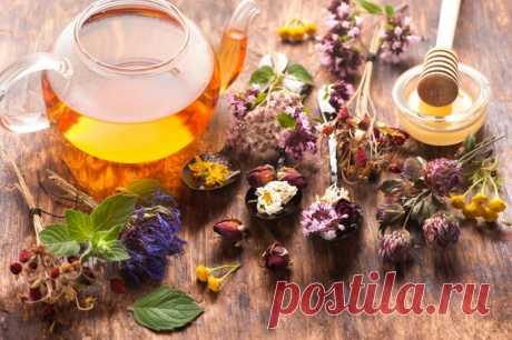 Травяные чаи на службе здоровья — Полезные советы