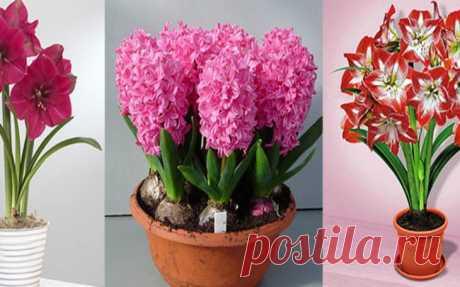 Комнатные растения, которые цветут практически круглый год. Видео! – В РИТМІ ЖИТТЯ