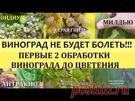 ВИНОГРАД НЕ БУДЕТ БОЛЕТЬ!!! ПЕРВЫЕ 2 ОБРАБОТКИ ВИНОГРАДА ПЕРЕД ЦВЕТЕНИЕМ.Болезни винограда.