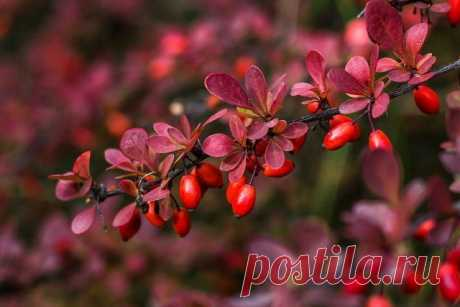 Decorative trees and bushes with beautiful fruits for an autumn garden