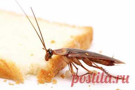 от тараканов - рецепты и отзывы