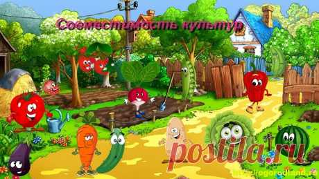 "Vegetables on beds ""are on friendly terms\"". Compatibility of cultures on a kitchen garden"