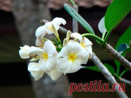 Сад орхидей, Пхукет, Таиланд