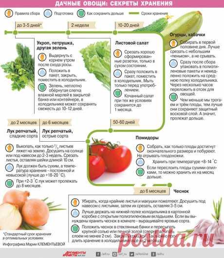 Секреты хранения дачных овощей