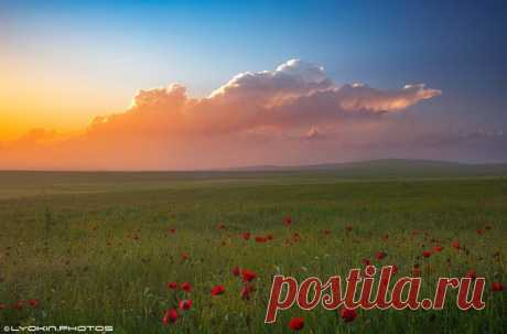 Закат на маковом поле, Азербайджан.