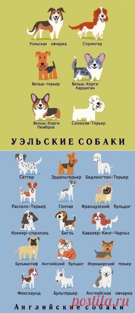 Шпаргалка по породам собак