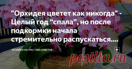 """""""Орхидея цветет как никогда"""" - Целый год """"спала"""", но после подкормки начала стремительно распускаться. Делюсь рецептом удобрения Доброго вам дня, уважаемые читатели! Спору нет, цветы  - украшение любого дома. Их красота непременно повышает настроение и делает пространство куда уютнее.   Орхидеи  - отдельный вид искусства, если можно так выразиться. Этот цветочек имеется почти что у всех людей, выращивающих что-нибудь на подоконнике. Орхидеи особенно красивы в момент своего..."""