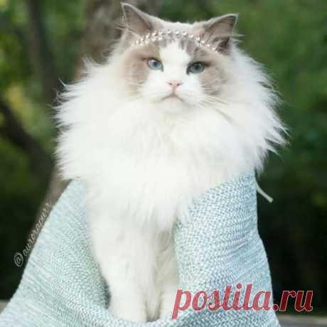 Народные поверья, связанные с окраской кошек