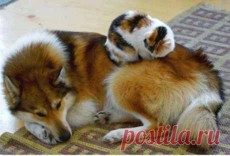 Фотолайф.ТВ - Категория «Домашние животные»