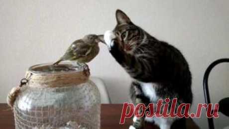 (60) Amici dei gatti di Su Pallosu