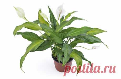 Исследователи также разработали приложение, которое помогает подобрать идеальное растение для себя