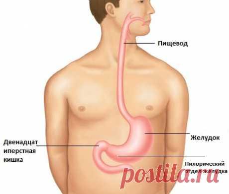 Хеликобактер пилори (helicobacter pylori). Информация для пациентов
