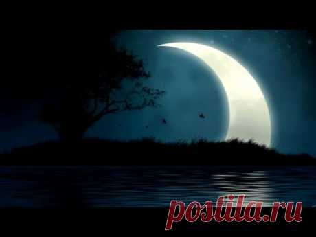 Звуки природы, ночной лес, пение птиц в вечернее время.