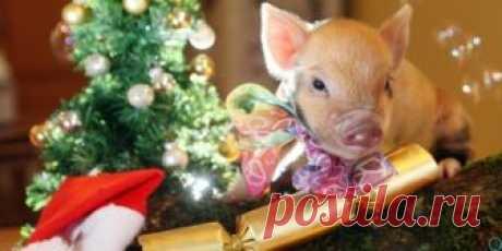 Китайский Новый год 2019: когда наступает год Свиньи, какого числа — Новый год по восточному календарю 2019 | info-vsem.ru