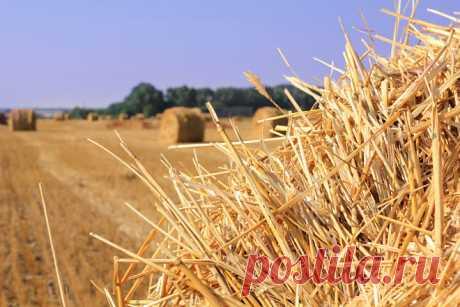 Приметы на 27 июля — День Акилы Соломенного Cчиталось, что лето идет на спад, и продолжалась уборка ржи.