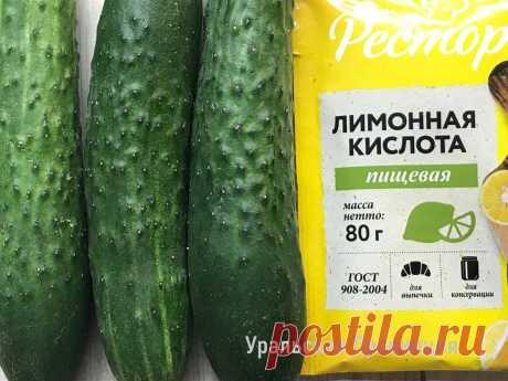 Не знала, что для успешного выращивания огурцов нужна лимонная кислота – сейчас применяю и всегда с богатым урожаем   Уральская провинция   Яндекс Дзен