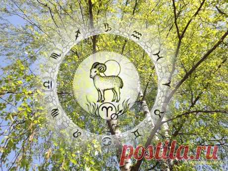 Гороскоп на период с 30 марта по 3 мая 2020 по неделям для Овна | Астропропаганда | Яндекс Дзен ♈✨ Автор: астролог Нина Стрелкова. ✧ Это время проверки на самостоятельность и жизнестойкость. Возможно проявление лидерских качеств в ситуации сильного напряжения. Слишком импульсивное поведение может быть опасно. В вашем знаке находится Солнце по 19 апреля и Меркурий с 11 апреля по 12 мая. Марс, управитель вашего знака, находится в Водолее, большую часть этого периода он конфликтует с Ураном...