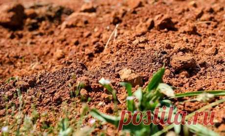 Как улучшить глинистую почву на садовом участке и на огороде? Часто нам приходится выращивать растения на глине или торфе. Выход здесь один – улучшать состав почвы. Осень как нельзя лучше подходит для этой процедуры.