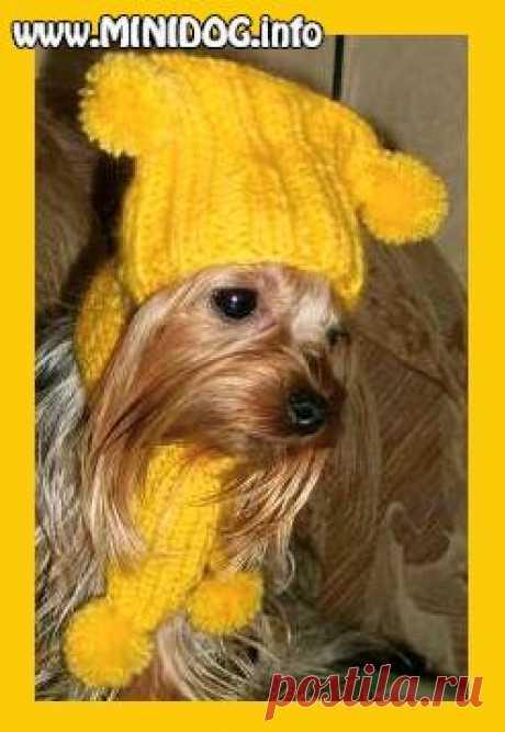 Сайт о маленьких собаках - Зимние вязаные шапочки