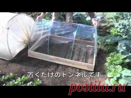 Из опыта японских огородников — 6 соток