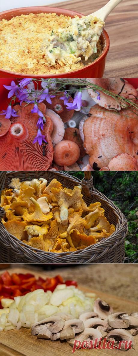 От богов до грибов. Побалуем себя грибной запеканкой? | Еда и кулинария