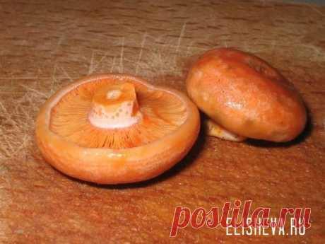 Рыжики, консервирование грибов и заготовки на зиму, рецепты с фото и видео | Блог elisheva.ru