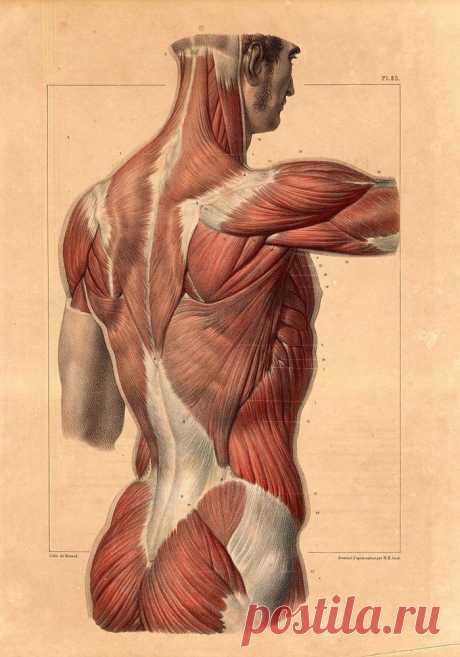 Гимнастика Гермеса: нормализует вес, укрепляет нервную систему, ускоряет метаболизм