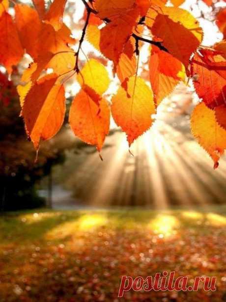 Советы на октябрь, от Дардо Кусто.