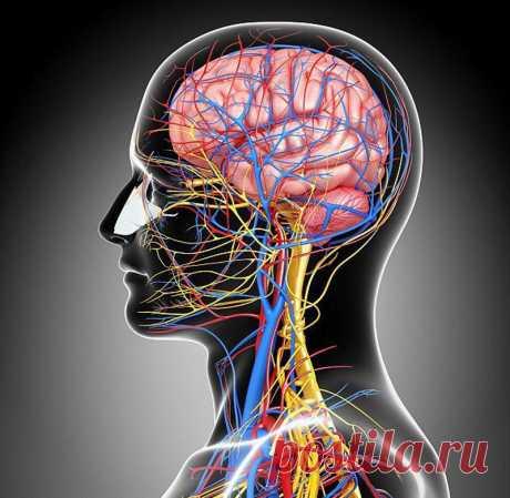 Черепаха, втягивающая голову: упражнение, которое предупредит заболевания сосудов головного мозга