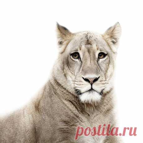 Фотографии животных на паспорт