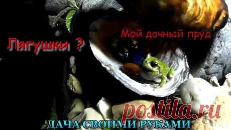 Мой дачный пруд. Где живут лягушки. Почтим минутой молчания умерших головастиков. Представляете. если бы все они выжили. Если кто знает, отличие между головастиками жаб и головастиками лягушек,...
