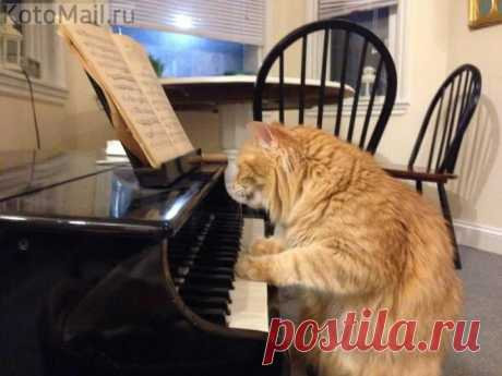 Хочу написать симфонию мурлыканья!