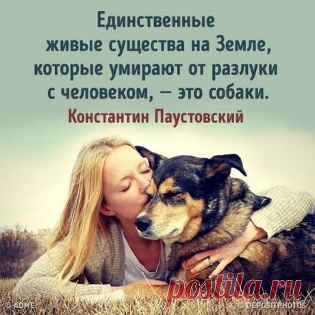 25собак, которые покажут вам, что такое настоящая любовь: bit.ly/2WJgNO3: