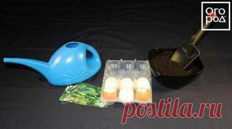 Емкости для рассады из яичной скорлупы | Рассада (Огород.ru)