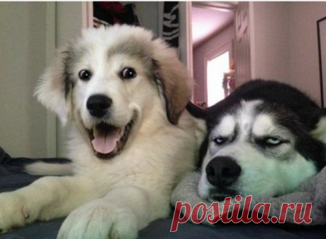 15 случаев, когда поведение собак не поддается логике