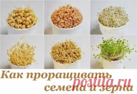 Как проращивать семена и зерна: сохраните их энергетический потенциал для своего здоровья!