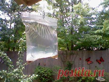 Этот простой способ поможет вам отогнать назойливых мух от вашего дома   Вот и настали тёпленькие деньки, а это означает, что активизировались надоедливые мухи, которые не только атакуют человека, но и его еду. Да, чтобы их отогнать, вы можете воспользоваться купленным в…