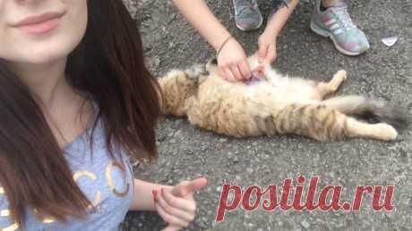 Петиция · суд: Данные девушки, предположительно, применяли насилие в отношении домашних животных. · Change.org