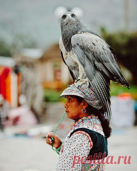 20 смешных и интересных фото для убойного настроение. | Любопытные факты | Яндекс Дзен